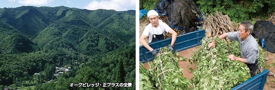 photo_mori